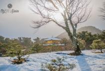 Kinkakuji | 16.1.2017